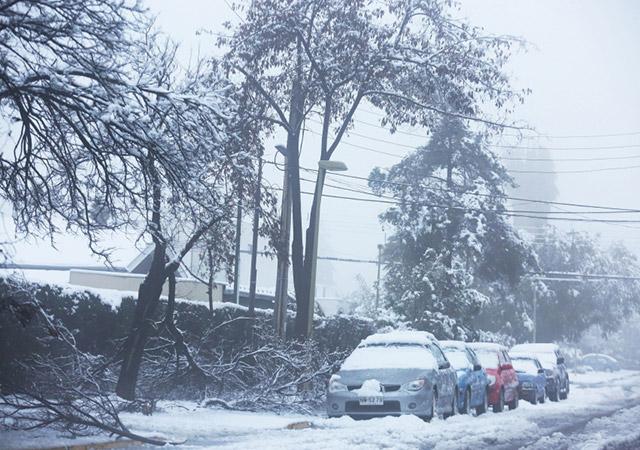 Beaucoup d'arbres n'ont pas pu résister au poids de la neige. - Photo : EPA